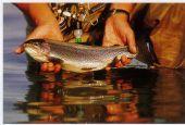 Pesca alla trota: l'apertura resta a febbraio