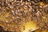 Sedici Comuni umbri amici delle api