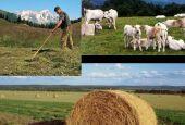 Agriumbria: l'impresa agricola e la continuità generazionale