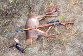 Il 16 giugno si torna a sparare a capriolo, cervo, daino e muflone