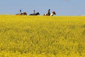 Passeggiata equestre a Collevalenza di Todi