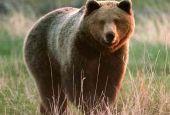 Orso terremotato nei boschi di Spoleto