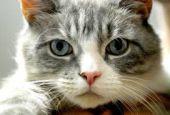 Gatti randagi: al via la sterilizzazione