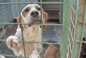 Guardie del WWF ispezionano i canili pubblici