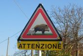 Ridurre incidenti stradali con la fauna selvatica