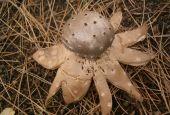 Un fungo raro all'Isola Polvese