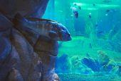 Nuova vita per l'Acquario del Trasimeno