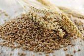 Nuovo Cda per la Cooperativa Cereali Deruta