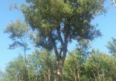 Una rarità botanica a Mezzanelli