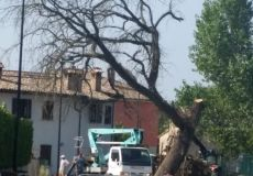 Massa: rimossa la quercia morta in mezzo alla strada