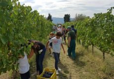 Cantine umbre aperte in vendemmia