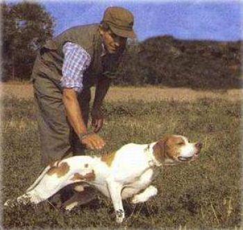 Cambiano gli ambiti territoriali di caccia