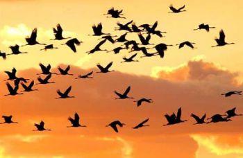 Uccelli in Umbria: diminuzione nella stagione riproduttiva ed aumento in quella invernale
