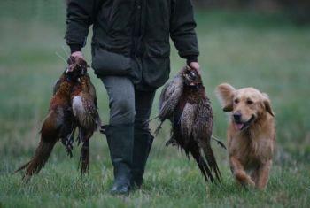 Chiusura della caccia, la Libera Caccia Umbria contro l'Ispra