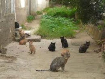 Massa: meno gatti nel centro storico ma…