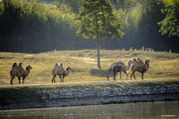 Nel parco degli animali a Todi