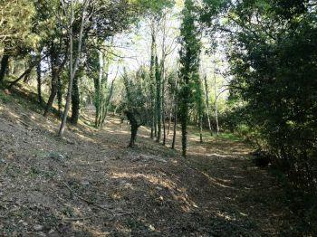 Todi, così rinasce il bosco della Cittadella