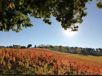 Week end di olio e vino nel montefalchese