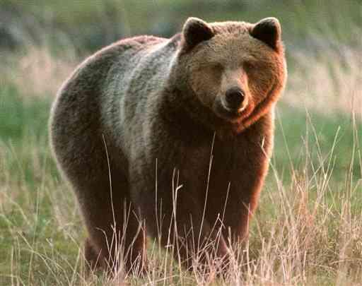 Salvate quell 39 orso il giornale online dell - Immagini di orsi da colorare in ...
