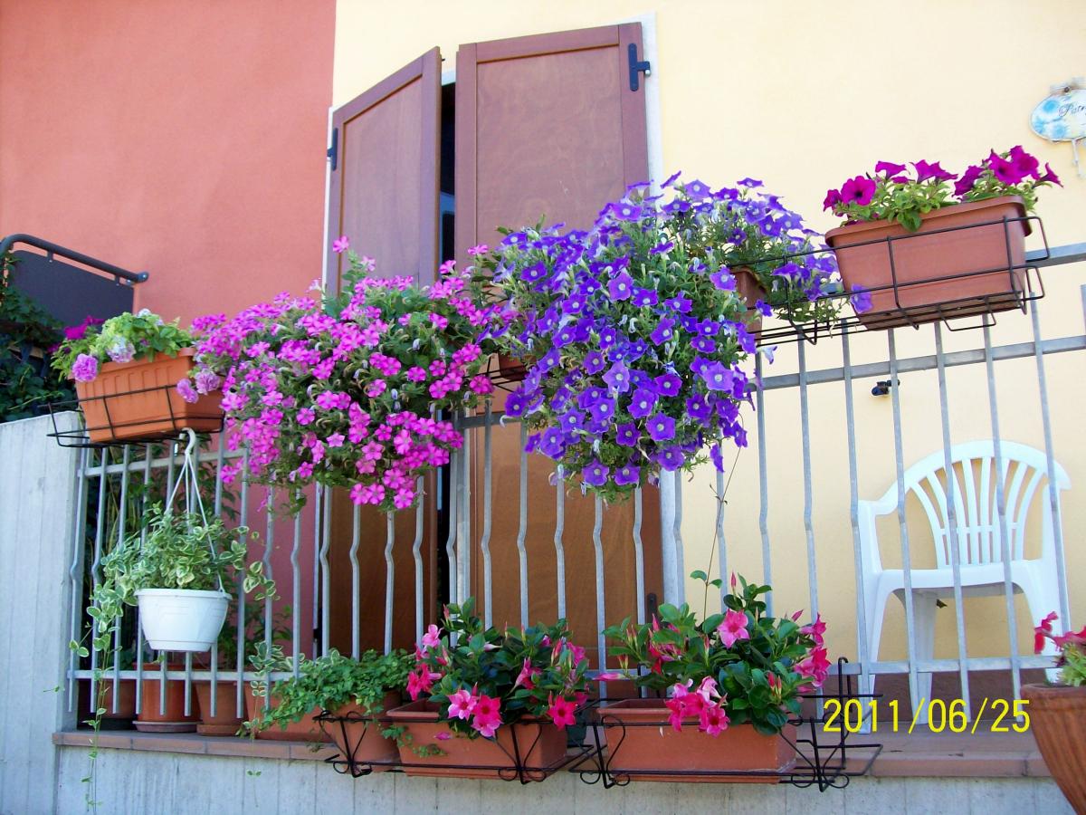 Concorso per il balcone e il giardino fiorito pi bello for Tutto per il balcone