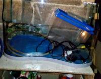 Acquario per tartarughe o pesci