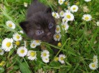 Regalasi tenerissima gattina nera