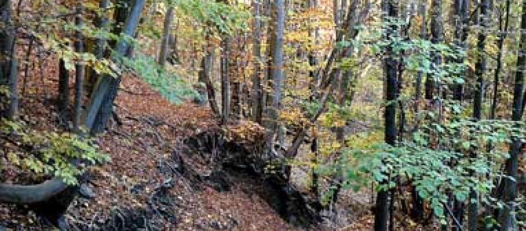 bosco-castagno-ceduo